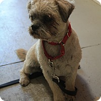 Adopt A Pet :: Bailey - Canyon Country, CA