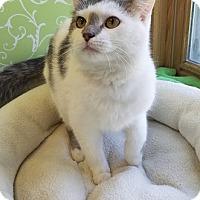 Adopt A Pet :: Wayne - Red Wing, MN