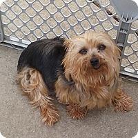 Adopt A Pet :: Cupcake-Adoptin pending - Union Grove, WI