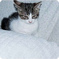 Adopt A Pet :: Patches - New Egypt, NJ