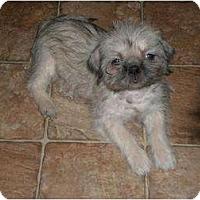 Adopt A Pet :: Friday - New Boston, NH