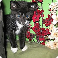 Adopt A Pet :: Clementine - Clearfield, UT