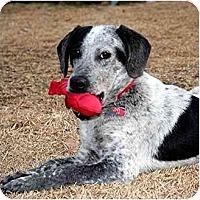 Adopt A Pet :: Blue - Washington, NC
