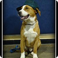 Adopt A Pet :: Max - Indian Trail, NC