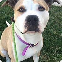 Adopt A Pet :: Tootsie - San Diego, CA