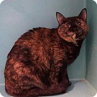 Adopt A Pet :: Cleo - West Des Moines, IA