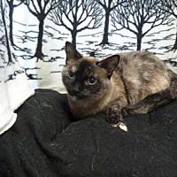 Adopt A Pet :: Tabatha - South Haven, MI