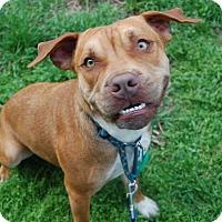 Adopt A Pet :: Bart - Wilmington, DE