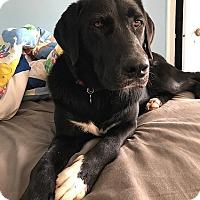 Adopt A Pet :: Tucker (fka Midnight #5) - Towson, MD