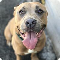 Adopt A Pet :: MACE - Santa Clarita, CA