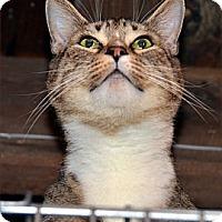 Adopt A Pet :: Tyler - Taftville, CT