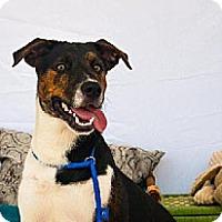 Adopt A Pet :: Monster - Houston, TX