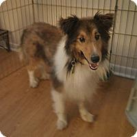 Adopt A Pet :: Hoyt PENDING - Abingdon, MD