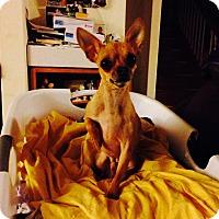 Adopt A Pet :: Nigel - Seattle, WA