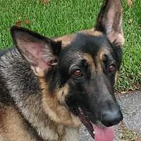 Adopt A Pet :: Rex - Riverview, FL