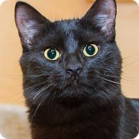 Adopt A Pet :: Ethel - Irvine, CA