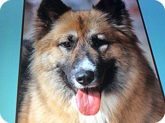 German Shepherd Dog Dog for adoption in Los Angeles, California - LUNA VON LUNZ