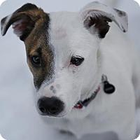 Adopt A Pet :: Ramsey - South San Francisco, CA
