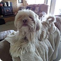 Adopt A Pet :: TAZ - Chewelah, WA