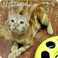Adopt A Pet :: Pumpkin - Laplace, LA