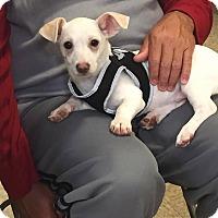 Adopt A Pet :: Lucky - Brea, CA