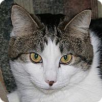 Adopt A Pet :: Molly - Port Angeles, WA