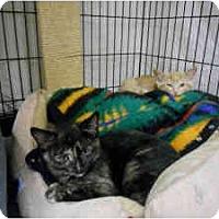 Adopt A Pet :: Mossi - Milwaukee, WI