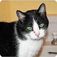 Adopt A Pet :: Rossini - Racine, WI