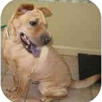 Adopt A Pet :: Peaches - Bethesda, MD