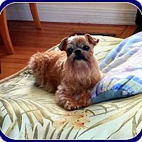 Adopt A Pet :: PRINCESS KATIE in Indiana - Seymour, MO