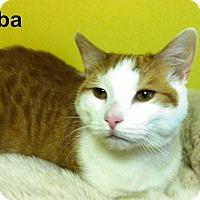 Adopt A Pet :: Simba - Medway, MA