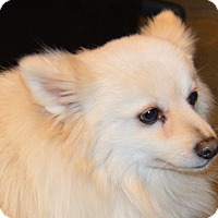 Adopt A Pet :: Grant - Prole, IA