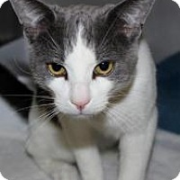 Adopt A Pet :: Anders - Casa Grande, AZ