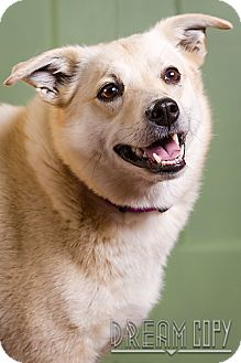 Labrador Retriever Mix Dog for adoption in Owensboro, Kentucky - Nilla DRD program