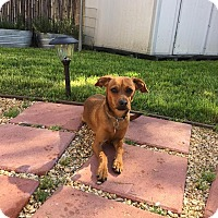 Adopt A Pet :: Buddy - Fountain Valley, CA