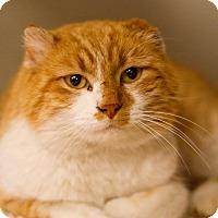 Adopt A Pet :: Howard - Grayslake, IL