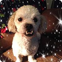 Adopt A Pet :: Adopted!! Marley - S. TX - Tulsa, OK