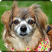Adopt A Pet :: Firefly - Vista, CA