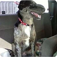 Adopt A Pet :: Abagaile in OK - Oklahoma City, OK