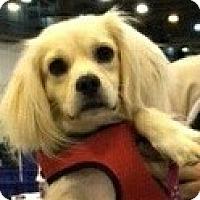 Adopt A Pet :: Augie - Sugarland, TX