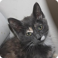 Adopt A Pet :: Alibi (LE) - Little Falls, NJ