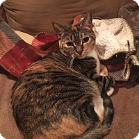 Adopt A Pet :: Calista - Mount Laurel, NJ