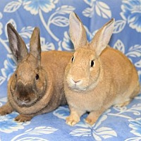 Adopt A Pet :: Jonah and JoAnn - Chesterfield, MO