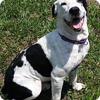 Adopt A Pet :: Johny - Fort Myers, FL