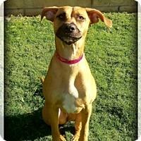 Adopt A Pet :: Hannah - Newport Beach, CA