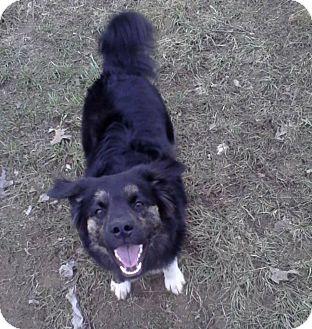 Australian Shepherd Mix Dog for adoption in Laingsburg, Michigan - Caspier