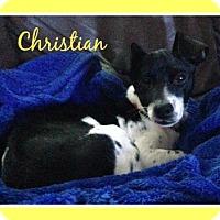 Adopt A Pet :: Christian - Elburn, IL