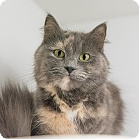 Adopt A Pet :: Kristy-At Medina Petsmart - Seville, OH