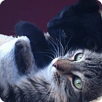 Adopt A Pet :: Nema - Los Angeles, CA