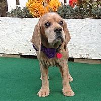 Adopt A Pet :: Jimmy - Santa Barbara, CA